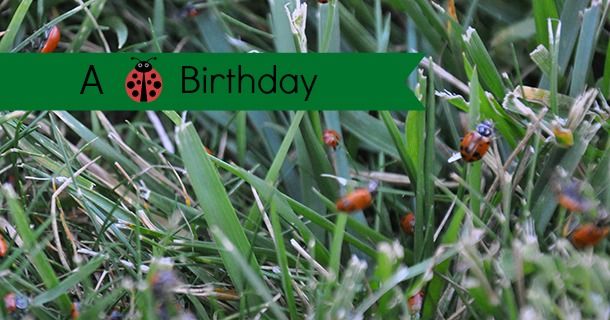 A Ladybug Birthday Party